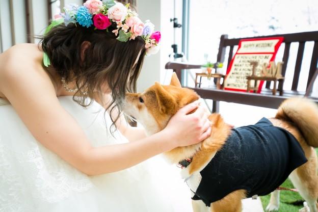 グランマニエのウエディングドレス|セルドレス|柴犬