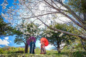 和装|青空|桜